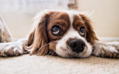 ¿ Notas a tu perro deprimido ?