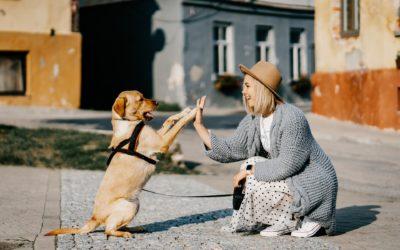 Parecidos entre mascotas y dueños