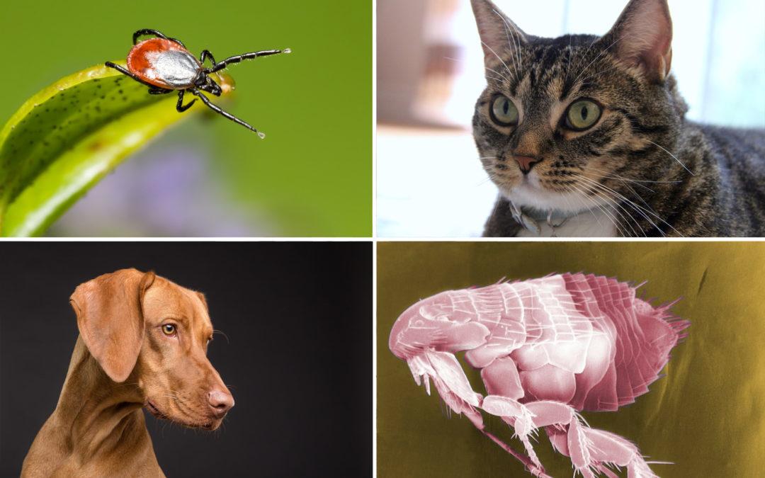Parásitos más comunes de gatos y perros